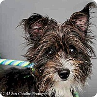 Adopt A Pet :: Monroe - Long Beach, CA