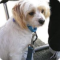 Adopt A Pet :: Fig Newton - Santa Monica, CA