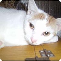 Adopt A Pet :: Benny - York, PA