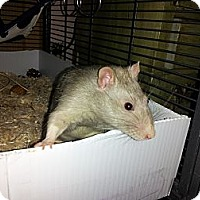 Adopt A Pet :: WALTER and ALGERNON - Philadelphia, PA