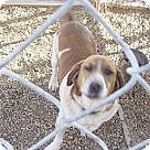 Adopt A Pet :: Murry(BRN)