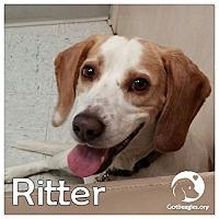 Adopt A Pet :: Ritter - Novi, MI