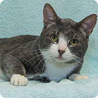 Adopt A Pet :: Chase - Elmwood Park, NJ