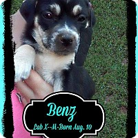 Adopt A Pet :: Benz Adoption pending - East Hartford, CT
