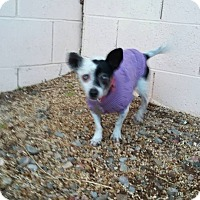 Adopt A Pet :: Freckles - Henderson, NV