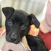 Adopt A Pet :: Keeli - Muldrow, OK