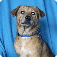 Adopt A Pet :: Paxton - Minneapolis, MN