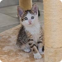Adopt A Pet :: Leonard - St. Paul, MN
