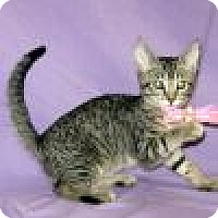 Adopt A Pet :: Kizmet - Powell, OH