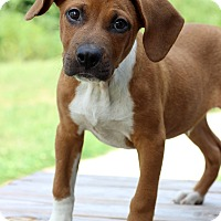 Adopt A Pet :: Edgar - Waldorf, MD