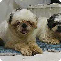 Adopt A Pet :: Pierre - Tavares, FL