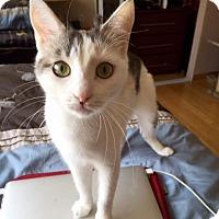 Adopt A Pet :: Saranna - Los Angeles, CA