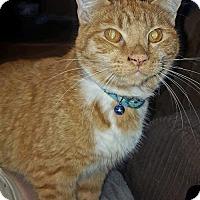 Adopt A Pet :: Frank - Burlington, WA