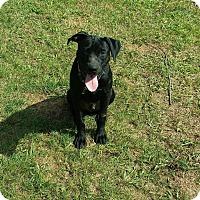 Adopt A Pet :: Nugget - fort wayne, IN