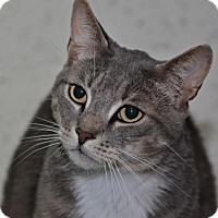 Adopt A Pet :: Brendan - Meriden, CT
