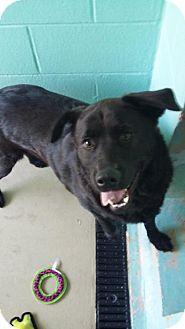 Labrador Retriever Mix Dog for adoption in Manteo, North Carolina - Wilma