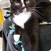 Adopt A Pet :: Cecillia - Austintown, OH