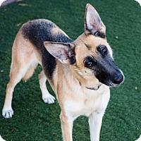 Adopt A Pet :: Emilia - Agoura, CA