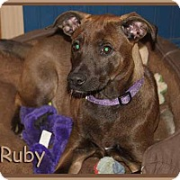 Adopt A Pet :: Ruby - South Bend, IN