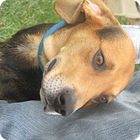Adopt A Pet :: Blair - Mount Sterling, KY
