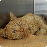 Adopt A Pet :: Orion - Elyria, OH