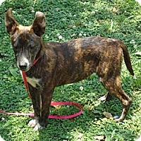 Adopt A Pet :: Isham - Hagerstown, MD