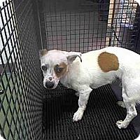Adopt A Pet :: Spot URGENT - San Diego, CA