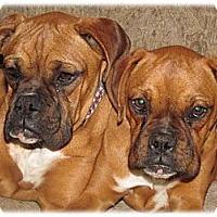 Adopt A Pet :: Razzle & Dazzle - Santa Monica, CA