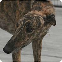 Adopt A Pet :: carleton - Santa Rosa, CA