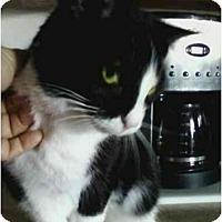 Adopt A Pet :: Tinkerbelle - Delmont, PA