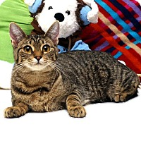 Adopt A Pet :: Patty Cakes - Sidney, ME