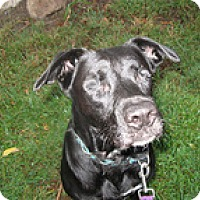 Adopt A Pet :: Rayce - Philadelphia, PA
