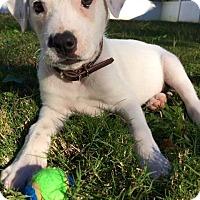 Adopt A Pet :: Snow Bunny - Peachtree City, GA