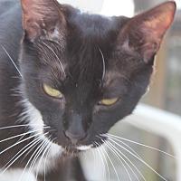 Adopt A Pet :: Francis - Bonita Springs, FL