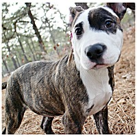 Adopt A Pet :: Paisley - Forked River, NJ
