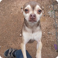 Adopt A Pet :: Rusty - Buchanan Dam, TX