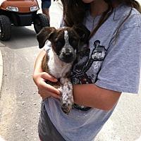 Adopt A Pet :: Birdie - Fair Oaks Ranch, TX