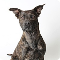 Adopt A Pet :: Bubbles - Show Low, AZ