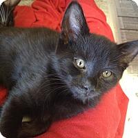 Adopt A Pet :: Oliver - Island Park, NY