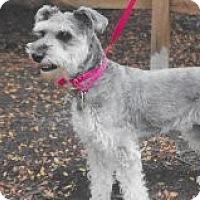 Adopt A Pet :: Winnie - Sharonville, OH