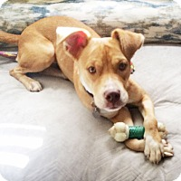Adopt A Pet :: Quinn - Knoxville, TN