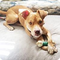 Adopt A Pet :: Quinn - Knoxville, TN