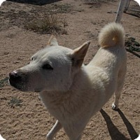 Adopt A Pet :: Toby - Encino, CA