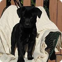 Adopt A Pet :: Jayden - Oakland, AR