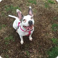 Adopt A Pet :: Gelsey - Burlington, NJ