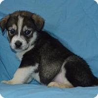 Adopt A Pet :: Blue Blood: Jamie - Palo Alto, CA
