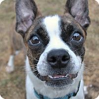 Adopt A Pet :: Buster - Howell, MI