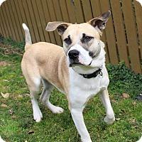 Adopt A Pet :: Tyler - Manhasset, NY