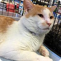 Adopt A Pet :: Roger - Gilbert, AZ
