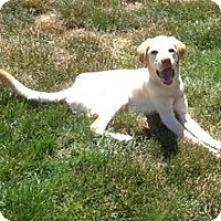 Adopt A Pet :: Nina - San Francisco, CA
